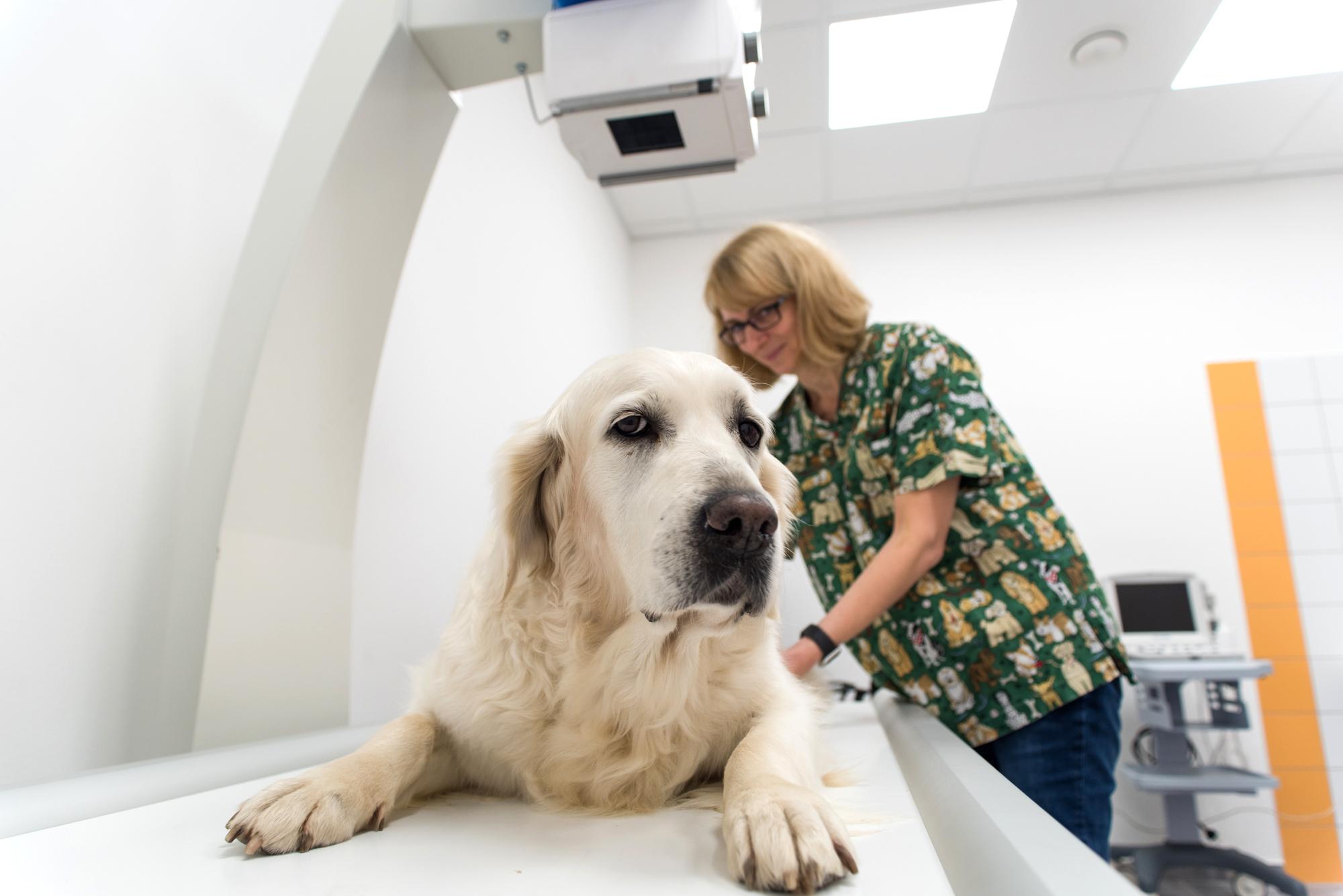 Auvet Pharma - Röntgen